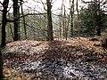 Dorvel Wood, Sapperton - geograph.org.uk - 1133659.jpg