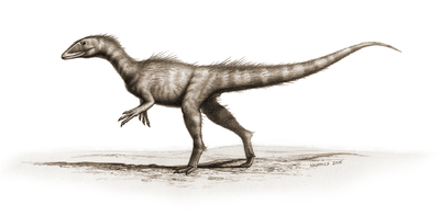 Dracoraptor hanigani.PNG