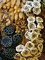 Dried-Flower Display - Farm Tomita - Nakafurano - Hokkaido - Japan - 02 (48006040346).jpg