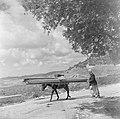 Druus met een met lange planken en een koffer beladen ezel op een landweg in Gal, Bestanddeelnr 255-1430.jpg