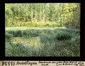 ETH-BIB-Andelfingen, Raubruch-See von Westen-Dia 247-13336.tif
