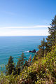 Ecola State Park Trail.jpg