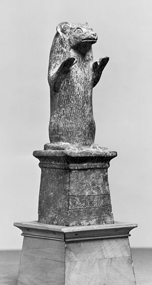 Egyptian mongoose - Image: Egyptian Ichneumon Walters 54410