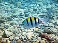 Eilat-coral-beach-reserve-c.JPG