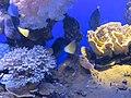 Eilat Coral World Underwater Observatory 07.jpg