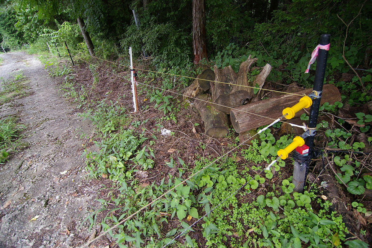 Image Result For Invisible Fence Dog