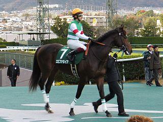 Epiphaneia (horse) Japanese-bred Thoroughbred racehorse