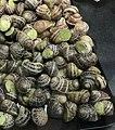 Escargots de Bourgogne petits gris.jpg