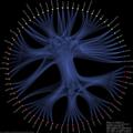 Evolution vendor category relationships.png