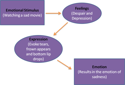 facial feedback theory The facial-feedback hypothesis some researchers have proposed that the brain uses feedback from facial muscles to recognize emotions that are being experienced this idea is known as the facial-feedback hypothesis .