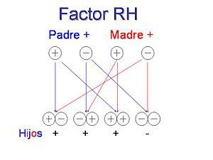 Factor rh.jpg