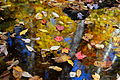 Fall-leaves-floating - West Virginia - ForestWander.jpg