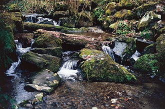 Pipers Creek (Seattle) - Pipers Creek in Carkeek Park