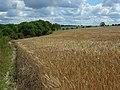 Farmland, Amesbury - geograph.org.uk - 491450.jpg