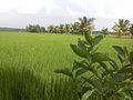 Farmland Athivetti.jpg