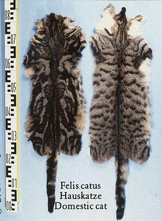 Fur farming - Cat skins