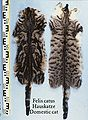 Felis catus (Domestic cat) fur skins.jpg