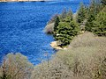 Fernworthy Forest on a glorious April afternoon - 2015 - panoramio.jpg