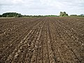 Field after Disk Harrowing - geograph.org.uk - 976496.jpg