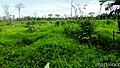 Finca de colonos en Area Indigena de Alamikamba. - panoramio.jpg