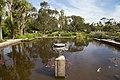 Fish pond, Logan Botanic Gardens.jpg