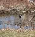 Fisherman near Lakeshore Blvd - Euclid Creek.jpg