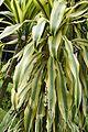 Flora of Kerala9009.jpg