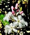 Flore locale, rare et protégée.jpg