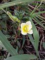 Flower1236.jpg