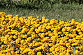 Flower 94 (8979646707).jpg