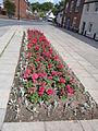 Flowerbed, Old Street, Ludlow - IMG 0271.JPG
