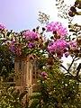 Flowers (002).jpg