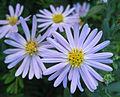 Flowers (152).jpg