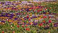 Flowers in Century Park Shanghai (26087911322).jpg