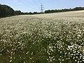 Flowery Fields.jpg