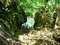 Fontaine des Tufs - Dessus (Les Planches-près-Arbois) (3).jpg