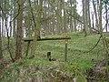 Footpath into pine woods - geograph.org.uk - 768619.jpg