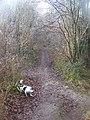 Footpath junction in Wingate Wood - geograph.org.uk - 1083552.jpg