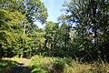 Forêt de Bon-Secours 09.jpg