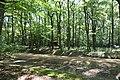 Forêt de Lespinasse (Loire) 005.jpg