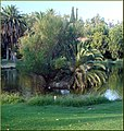 Ford Park, Island Sunrise, Redlands, CA 8-12 (7796892740).jpg
