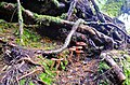 Forest (9705615668).jpg