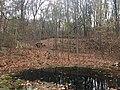 Forest in Schuykill.jpg