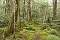 Forest in Yatsugatake 38.jpg