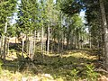 Forest on Aulich Hill - geograph.org.uk - 376717.jpg