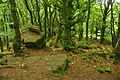 Forest on the Kymin, Monmouth (0169).jpg