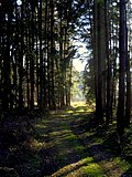 Forest path - Flickr - Stiller Beobachter (1).jpg