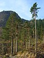 Forestry, Thirlmere - geograph.org.uk - 1073180.jpg