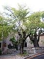 Fox Amphoux trees, 1.jpg