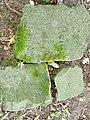 Fragmenty macew na byłym Cmentarzu Żydowskim w Połczynie Zdroju.jpg